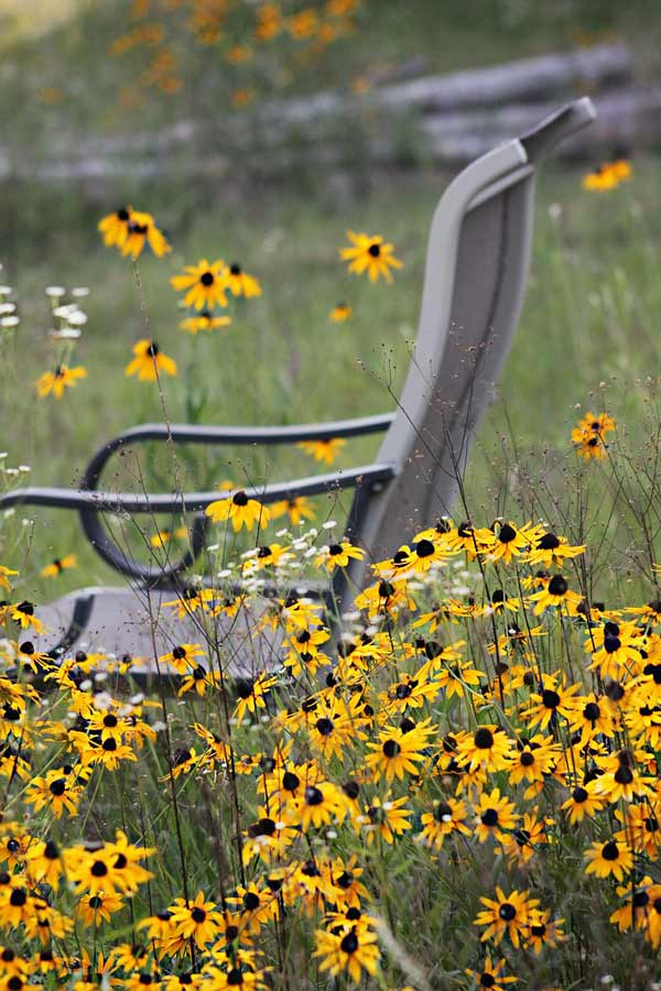 wildflowers and chair 600x900